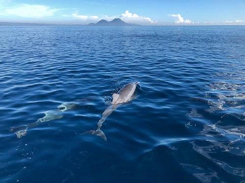 Rabaul Getaway