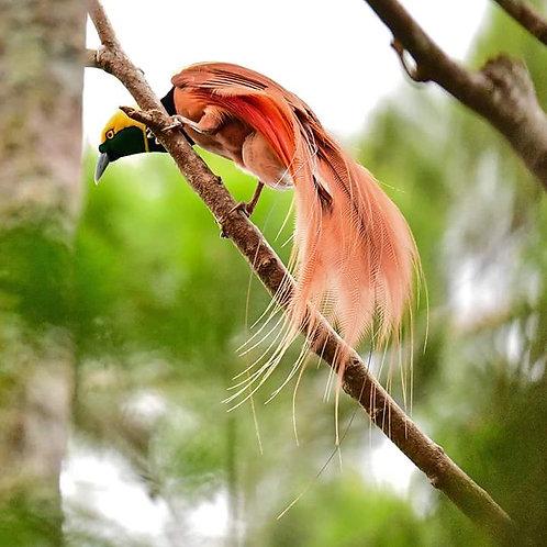 Bird watching/Photography