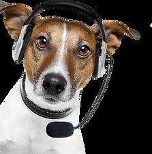 dog-operator-phone_edited.png