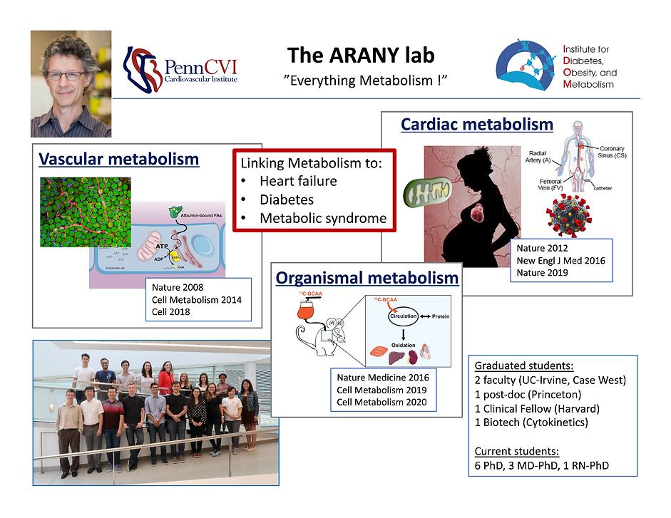 Arany Lab Slide.png