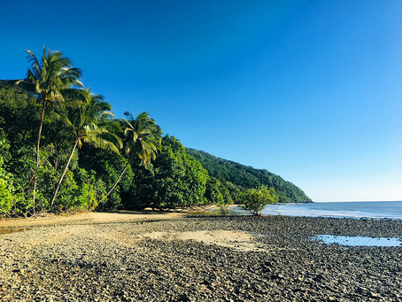 4 Reasons to Visit Cape Tribulation in Winter
