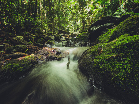 Magical Swimming Holes in Cape Tribulation