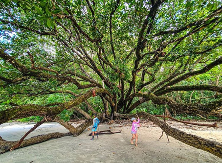 The Daintree is the perfect kid-friendly holiday destination!