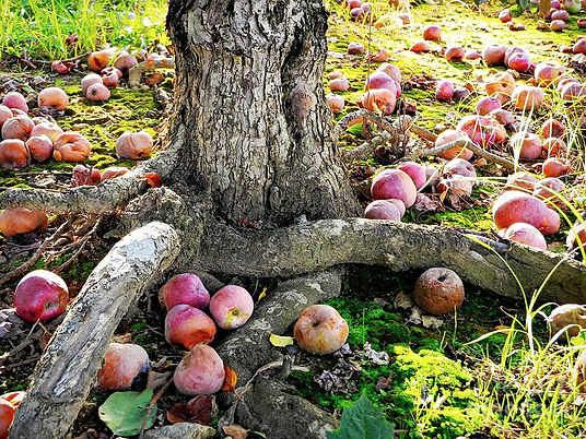 dont-sit-under-the-apple-tree-with-anyon