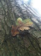 GILL IMAGE twig&leaf.jpg