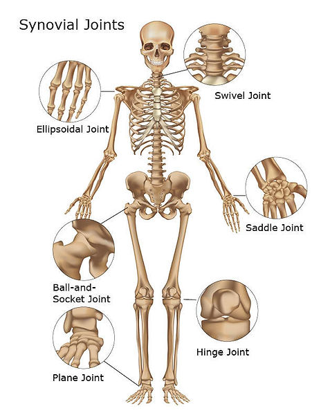 joints-of-body.jpg