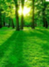 Eye Soothing Natural Green Wallpaper (2)