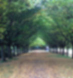 tree lined path to visualise a goal