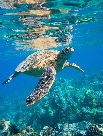 sea-turtle-2547084_1920.jpg