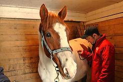 horse vet welland