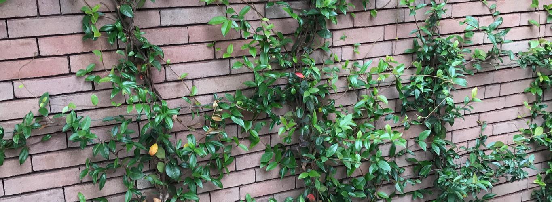 Klimplanten met subtiele leidraad