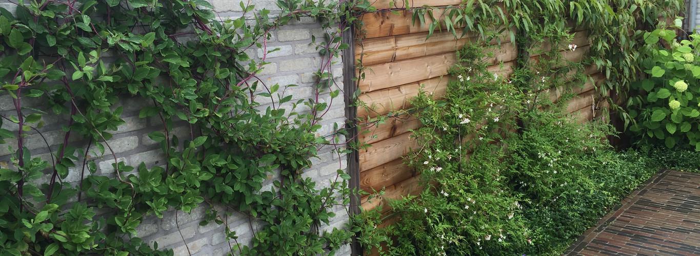 Begroeide houten afsluiting