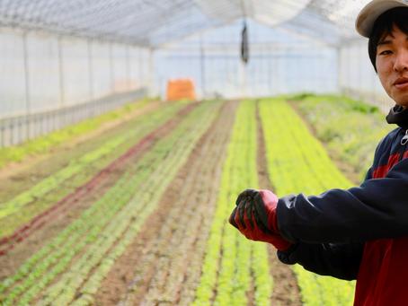 炭素循環農法の畑、見学会