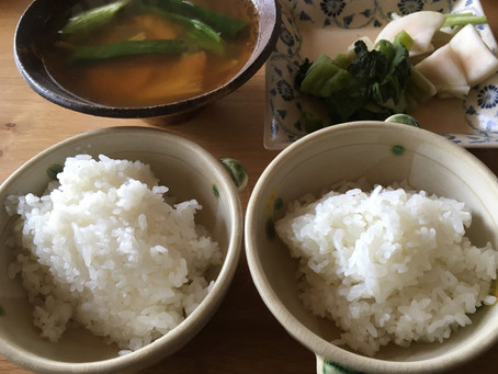 お米の味比べ その1 コシヒカリとハツシモ編