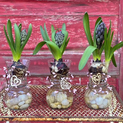 Hyacinth 6 inch vase (3 inches wide at top)