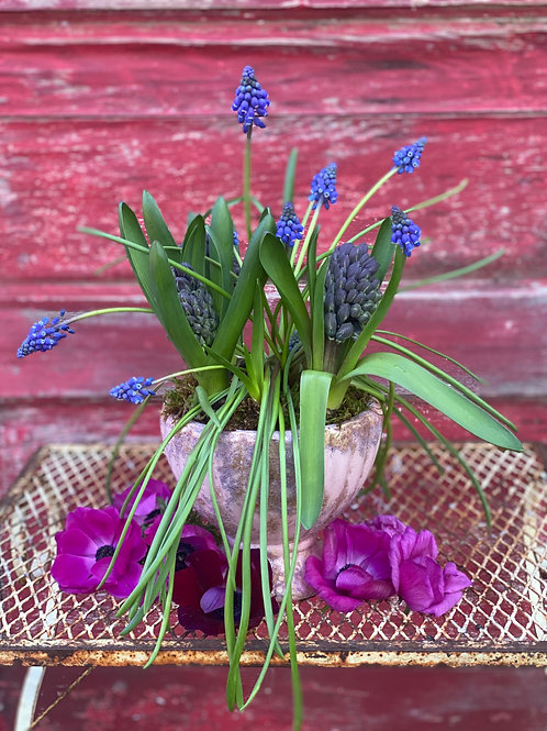 5 inch Muscari/Hyacinth