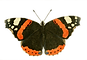 1-butterfly-1969045-transparent.png