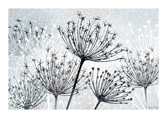 Seedheads A4 print