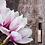 Thumbnail: Magnolia touch