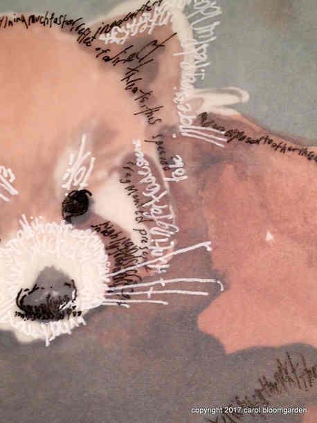 Red Panda Detail