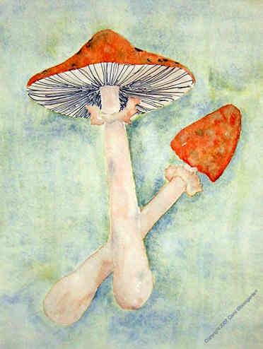 Khayyam's Mushrooms (SOLD)