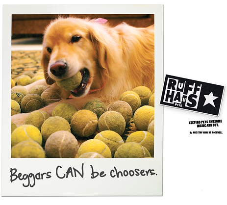 Beggars can be choosers. Healthy dog food at Ruff Haus Pets.