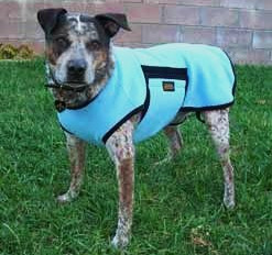 Dogs: Do They Need a Coat and Boots?