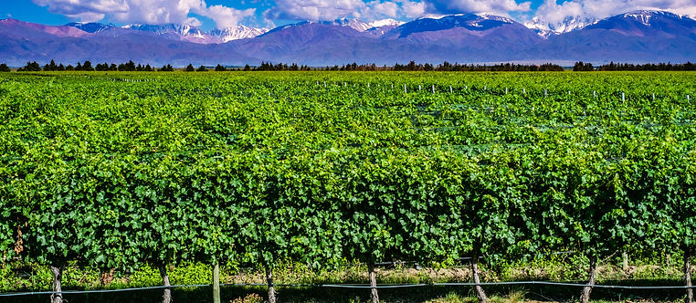 Travel Argentina, PatagoniaMed, Wine Country Mendoza