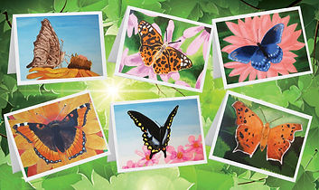 cards created from artwork and donated to Churchville Nature Center Giftshop