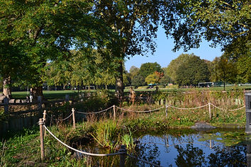 Autumn over the Pond 1.JPG