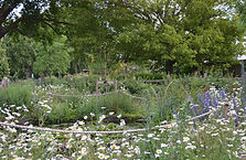 Flowers over pond June 19.JPG
