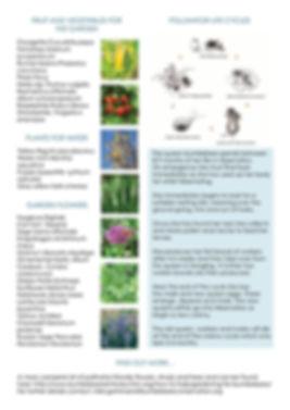 Pollinators_0004.jpg