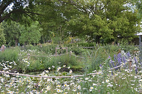 Pond wild flowers June 18.JPG