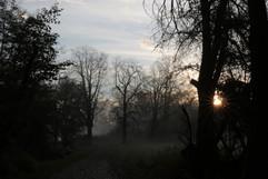 Mönchbruch, Naturschutzgebiet, Hessen