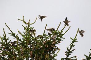 Landkreis Darmstadt-Dieburg, LaDaDi, Natur, Star, Vogel