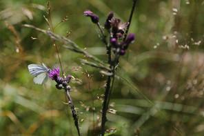 Schwarzes Moor, Rhön, Bayern, Naturlehrpfad, UNESCO, Biosphärenreservat, Natura2000, Hochmoor, Black Moor, Wetland, Bavaria, Germany, Biosphere Reserve, bog