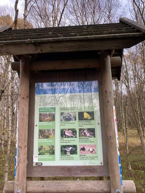 Naturschutzgebiet, Rotes Moor, Hochmoor, Biosphärenreservat Rhön, hessische Rhön, Hessen, Natura 2000