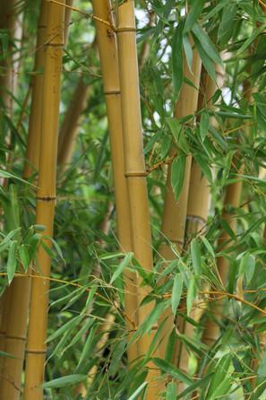 159A6399 Bambus.jpeg