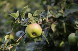 Main-Taunus-Kreis, Niederhöchstadt, Hessen, Herbst