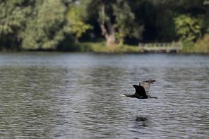 AltrheinErlebnisPfad, Altrhein, Schutzgebiet, Natura 2000, Eich-Gimbsheimer Altrhein, Gräser, Schilf, Libellen, Vögel