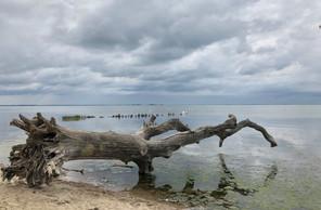 Schlafende Bäume, Loissin, Greifswalder Bodden, Ostsee, Mecklenburg-Vorpommern, Deutschland
