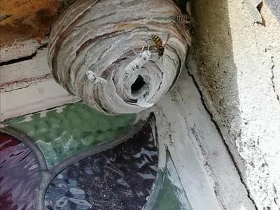Wasp Nest Treatment in Padiham, Burnley....
