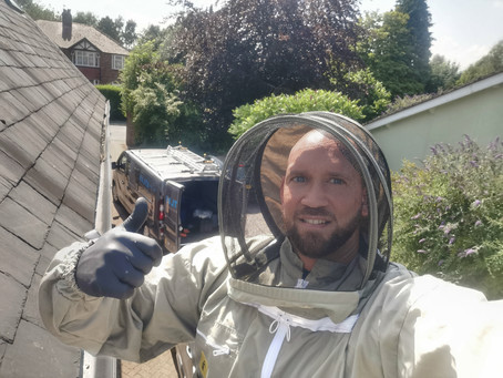 Professional Wasp Nest Treatment Specialists for East Lancashire.....