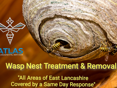 Wasp Nest Treatment and Removal Specialists in Burnley and Surrounding Areas......