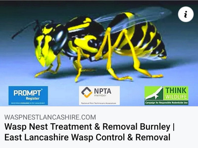 Wasp Nest Treatment Burnley, Colne, Nelson, Padiham, Accrington & East Lancashire....