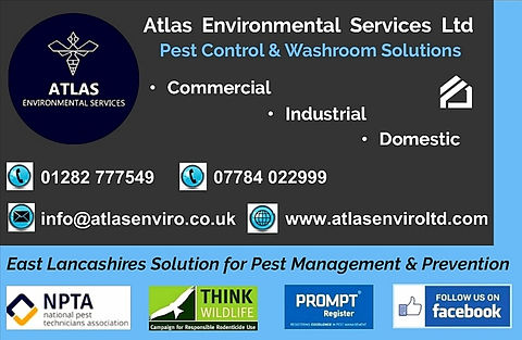 pest-control-burnley-wasp-nest-treatment-burnley-wasp-removal-burnley-rats-insects-atlas-environmental-services-ltd-burnley-pest-service