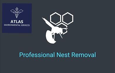 atlas-environmental-services-ltd-wasp-nest-removal-treatment