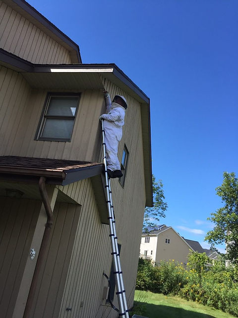 wasp-nest-removal-4.jpg