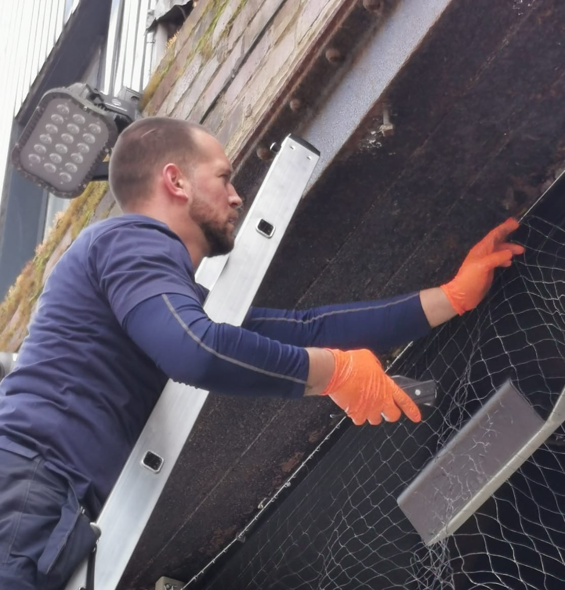 bird-netting-burnley-bird-control-pigeon