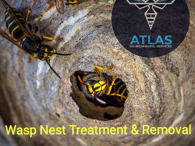 Wasp Nest Treatment Burnley - Wasp Nest Removal Burnley - Hornets Destroyed Burnley and East Lancs..